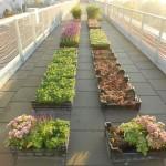 Schubert & Partner Gartengestaltung | Dachbegrünungspflanzen
