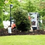 Schubert & Partner Gartengestaltung | Ersatzpflanzung