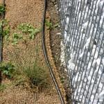 Schubert & Partner Gartengestaltung | Tropfschlauch