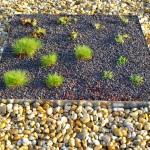 Schubert & Partner Gartengestaltung | Dachbegrünung