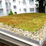 Schubert & Partner Gartengestaltung | Dachbegrünung mit Sedummatten