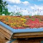Schubert & Partner Gartengestaltung | extensive Dachbegrünung