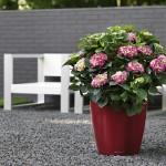 Schubert & Partner Gartengestaltung | Terrassenbegrünung in Pflanzgefäßen