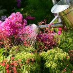 Schubert & Partner Gartengestaltung | Beetpflege