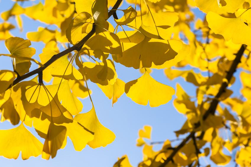 Herbst – das Festival der Farben beginnt
